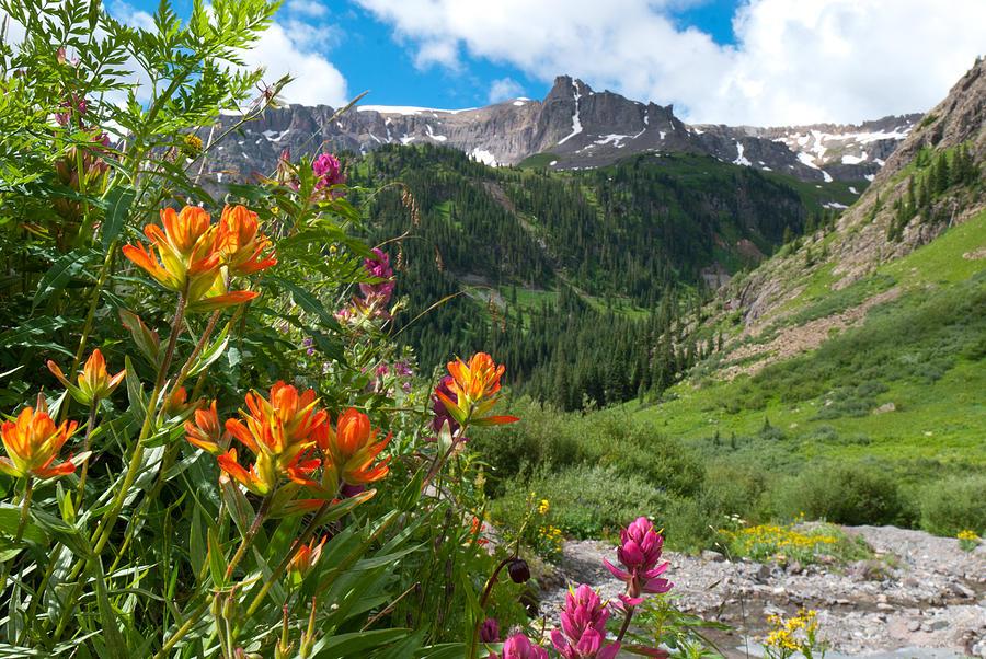 San Juans Indian Paintbrush Landscape Photograph