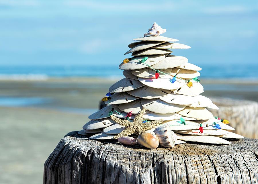 Sand Dollar Christmas by Ed Waldrop