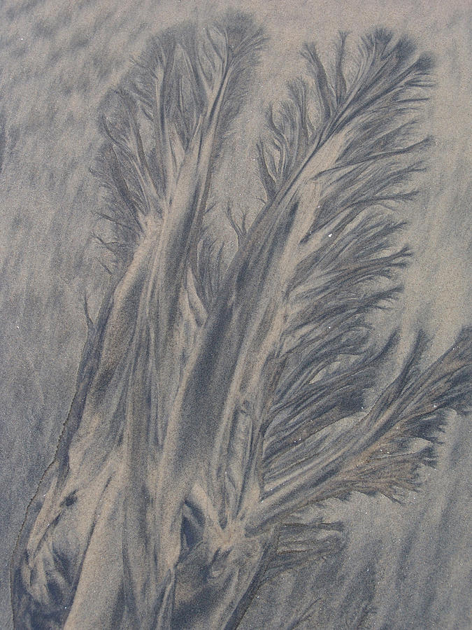 Sand Photograph - Sand Drawing 1 by Kevin Callahan