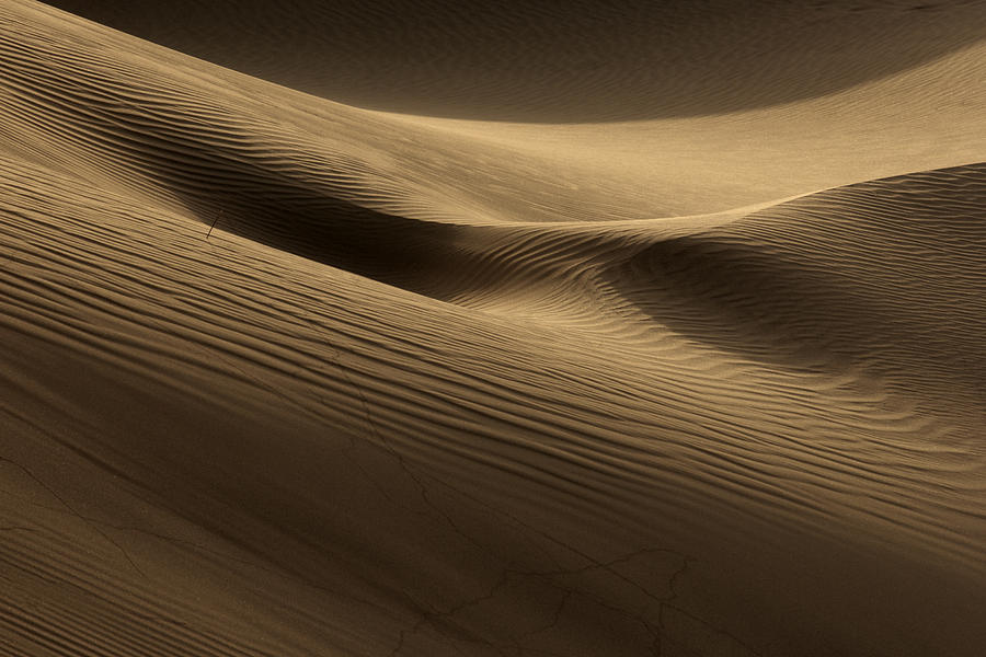 Dunes Photograph - Sand Dune by Phil Crean