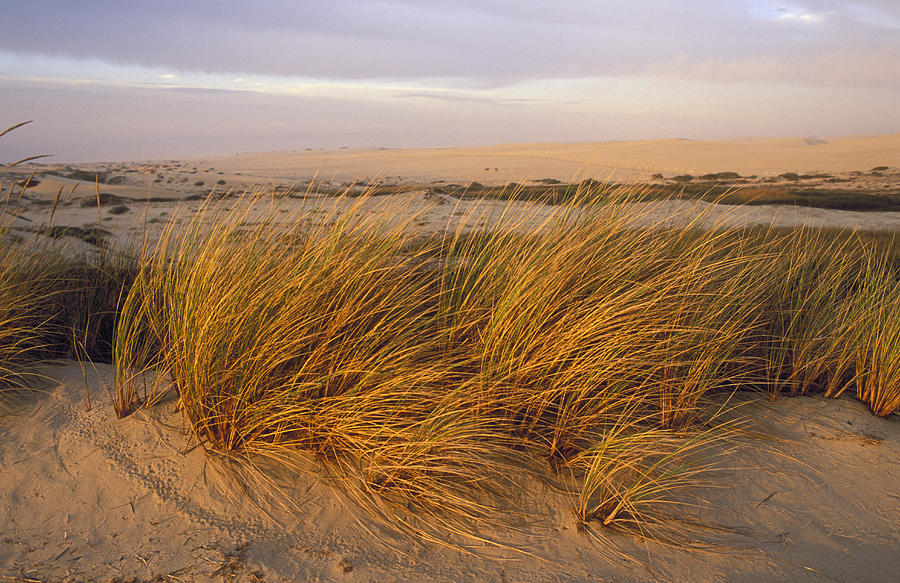 Sand Dunes Photograph - Sand Dunes At Oso Flaco Nature by Rich Reid