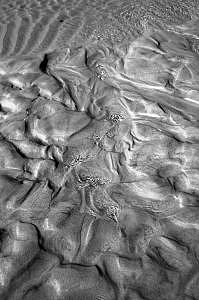 Sand Photograph - Sand Dunes by Jason Sanders