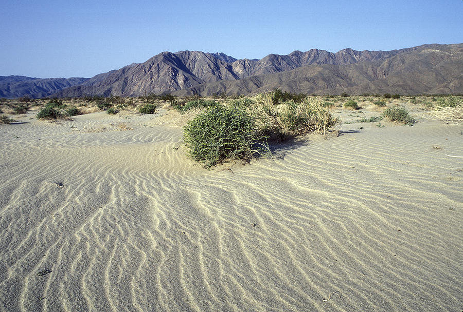 Desolate Landscapes Photograph - Sand Dunes & San Ysidro Mountains At El by Rich Reid