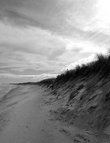 Sand Photograph - Sand Dunes by William Love