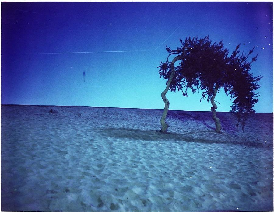 Time Exposure Photograph - Sand Trees by Braven Smillie
