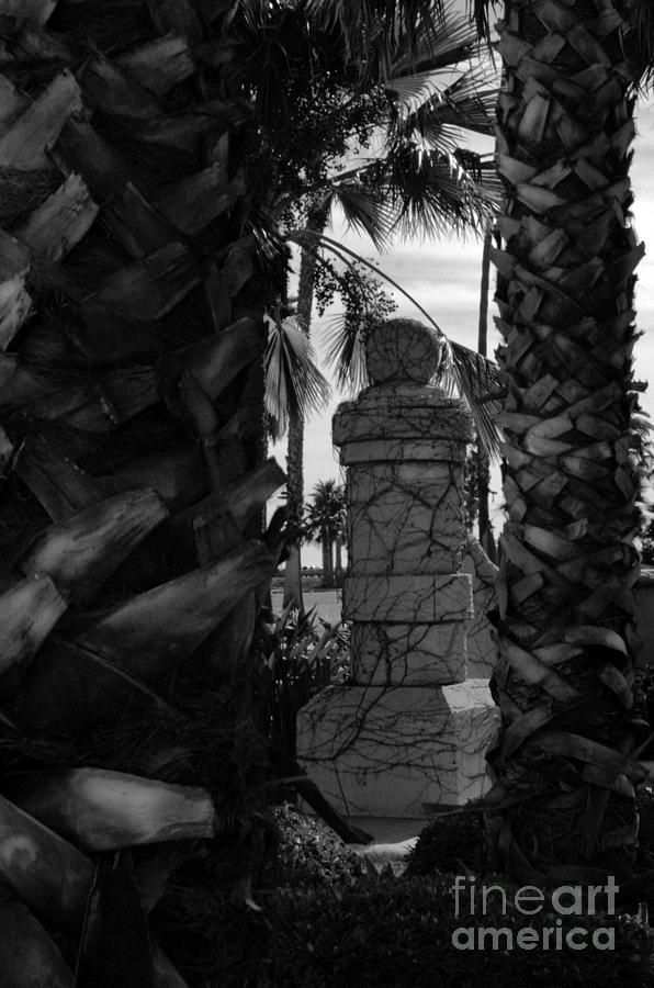 Palms Photograph - Sanders by Jason Sanders