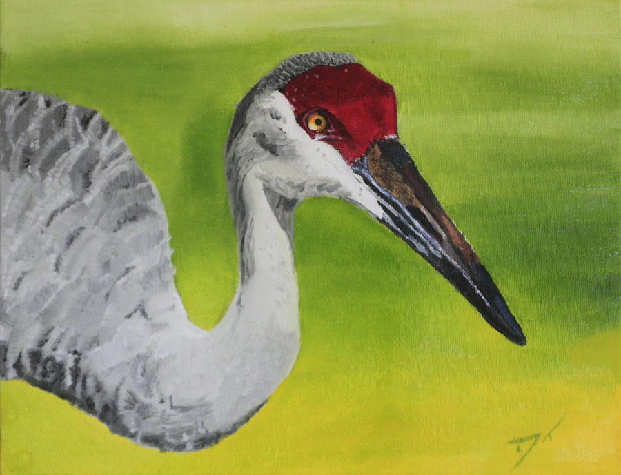 Bird Painting - Sandhill Crane by D Turner