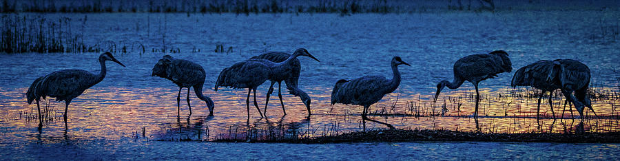 Sandhill Cranes at Twilight by Bruce Bonnett