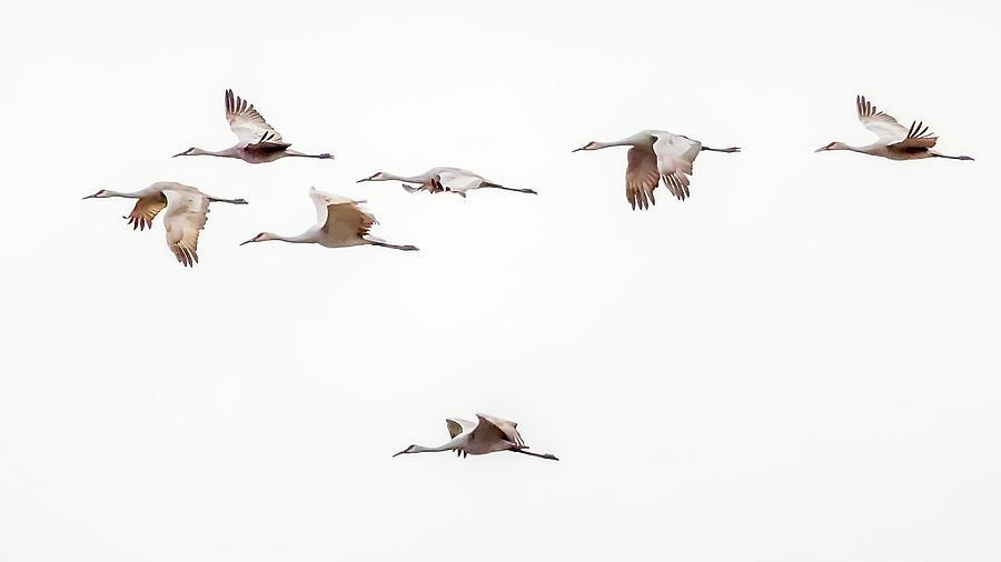 Sandhills Photograph - Sandhill Cranes by David Wynia