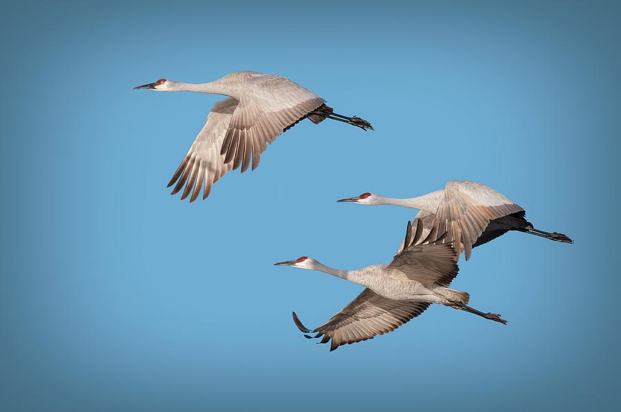 Crane Taking Off MENS T SHIRT flight flying bird birds cranes animal wildlife
