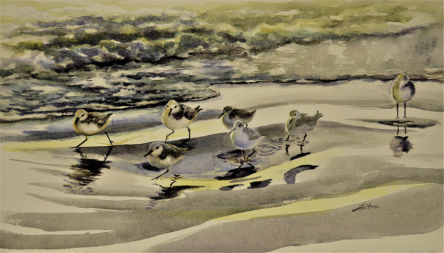 Sandpiper morning by Julianne Felton