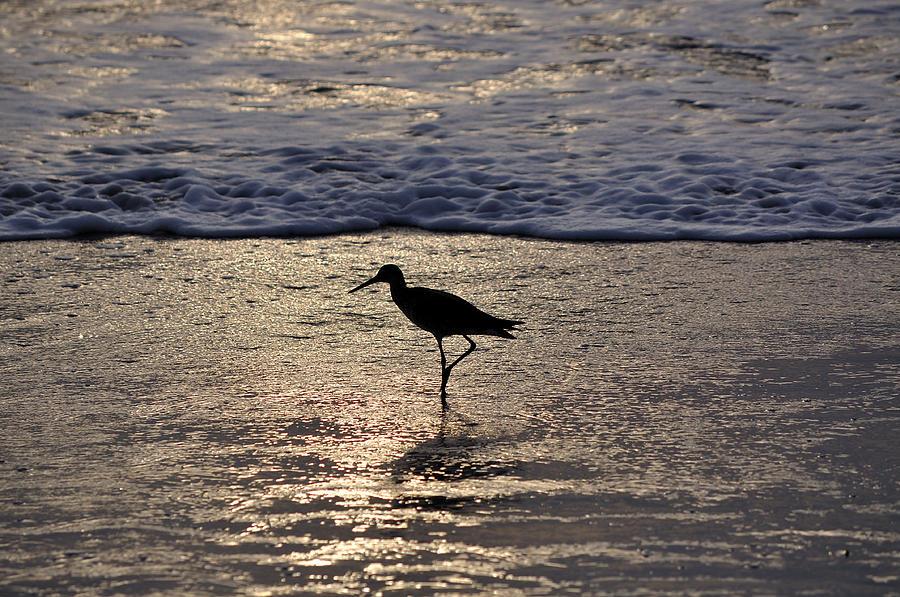 Sandpiper Photograph - Sandpiper On A Golden Beach by Kenneth Albin