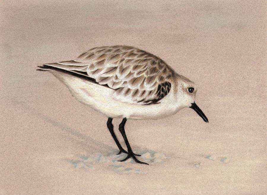 Sandpiper Drawing - Sandpiper On Sand by Heather Mitchell