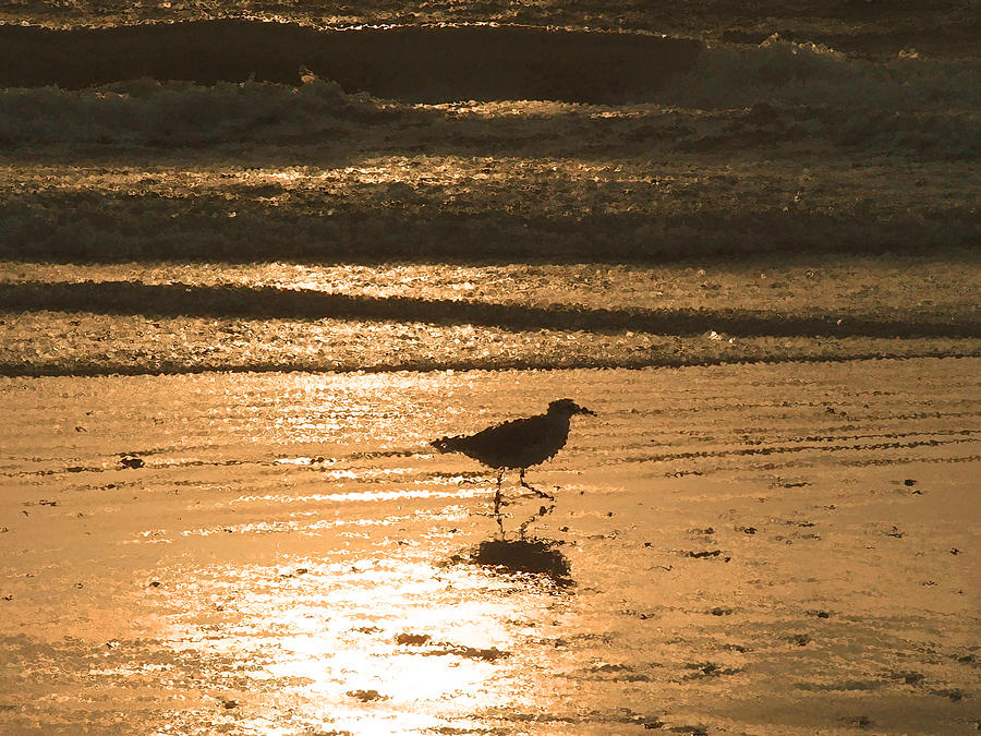 Nature Photograph - Sandpiper by Peg Urban