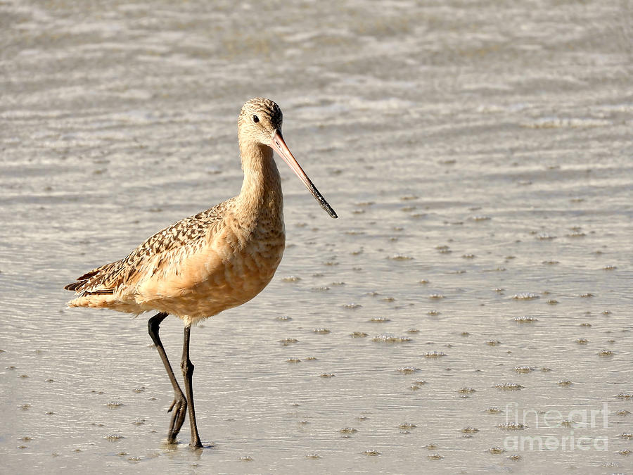 Sandpiper Photograph - Sandpiper Strolling - Horizontal by Beth Myer