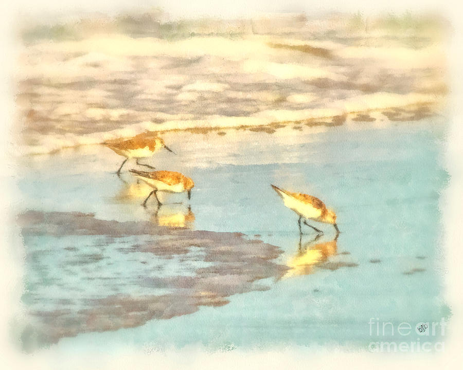 Seascape Photograph - Sandpipers Along The Shoreline by Betsy Foster Breen