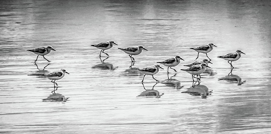 SANDPIPERS ON THE MOVE by MaryAnn Barry