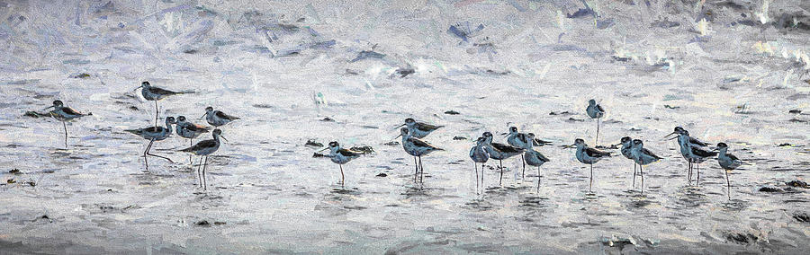 Sandpipers by Paul Bartell