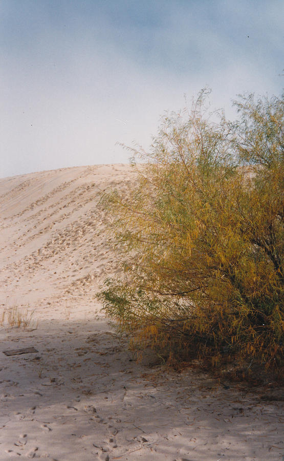 Sands Of Monahans Photograph by Cindy New