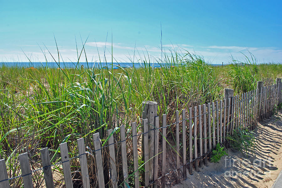 Rehoboth Photograph - Sands Of The Dune by Jost Houk