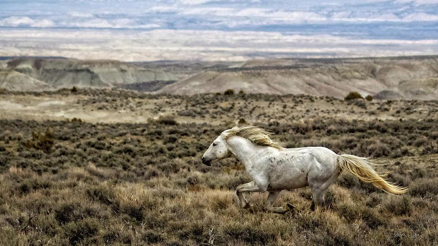 Sandwash Stallion Galloping by Joan Davis