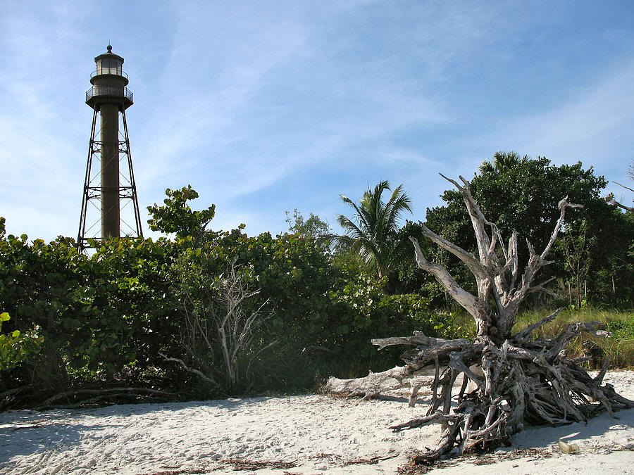 Sanibel Lighthouse Photograph - Sanibel Light And Driftwood by Christiane Schulze Art And Photography