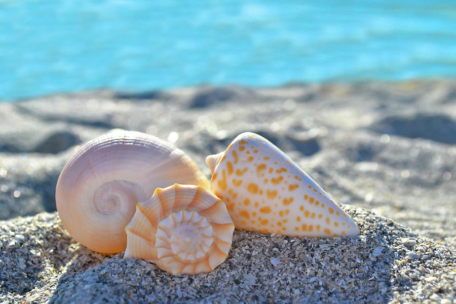 Sanibel Treasures  by Melanie Moraga