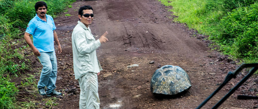 Galapagos Photograph - Santa Cruz Tortoise Traffic Obstruction by Harry Strharsky