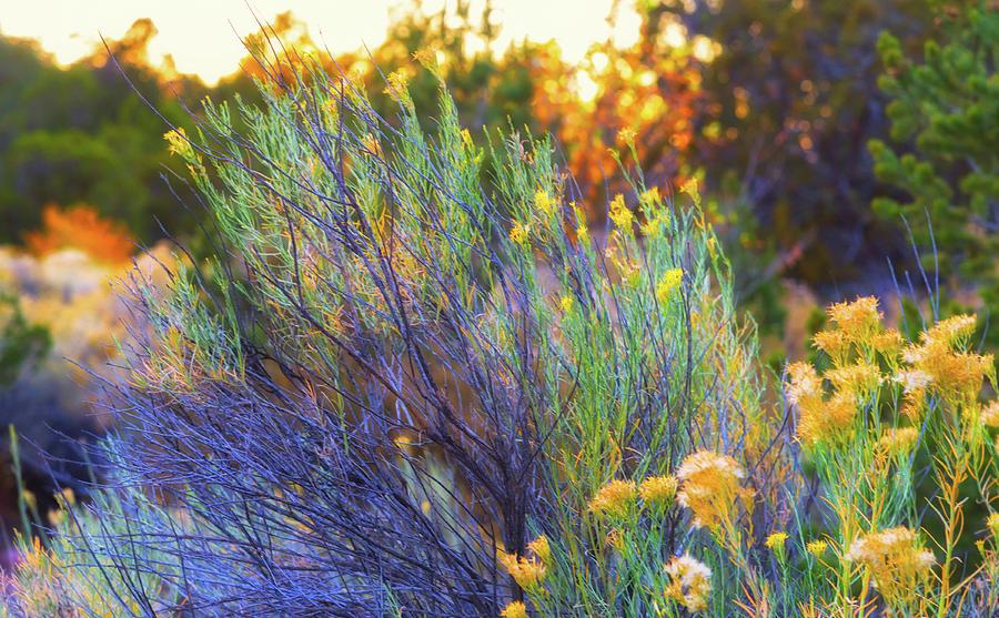 Santa Fe Beauty II Photograph