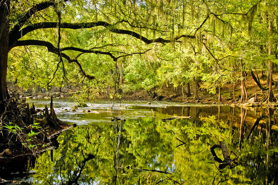 River Photograph - Santa Fe River by Rich Leighton