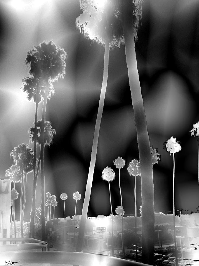 Palm Trees Photograph - Santa Monica Palms by Abstract Angel Artist Stephen K