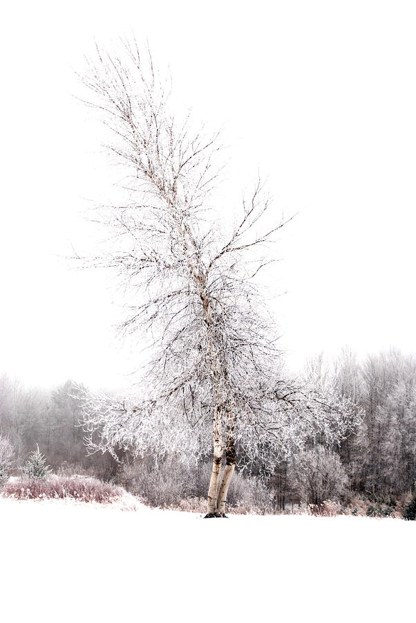 Tree Photograph - Santas Tree by Emily Stauring