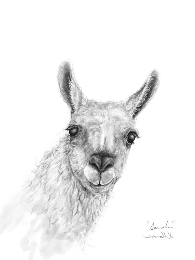 Llamas Drawing - Sarrah by K Llamas