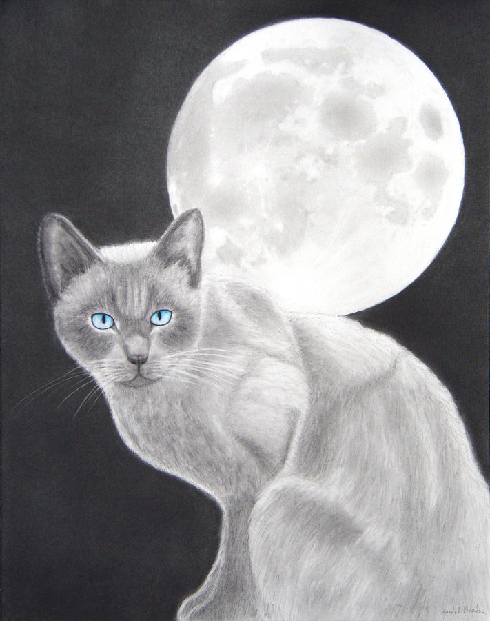 Cat Drawing - Sasha by Nicole I Hamilton