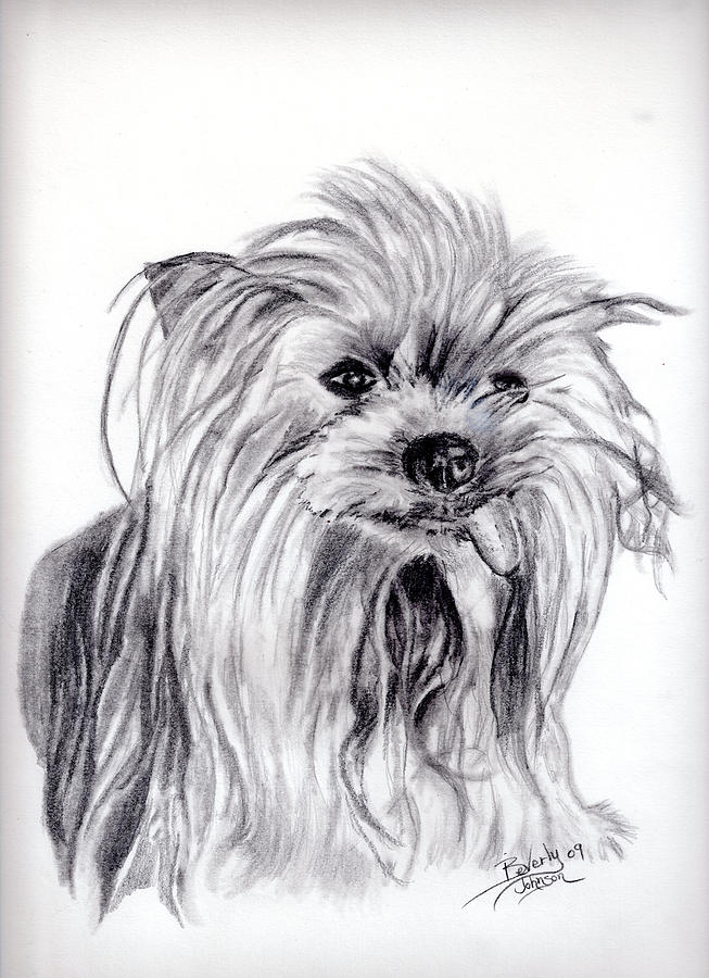 Dogs Drawing - Yorkie Lady by Beverly Johnson