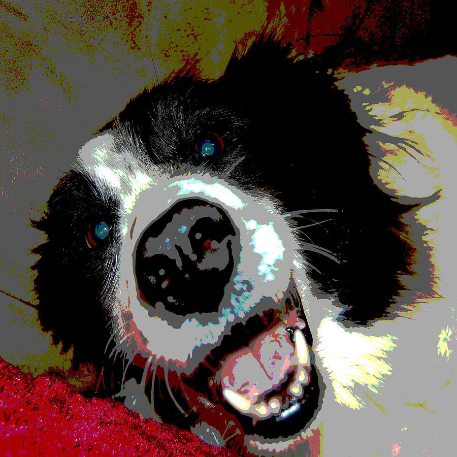 Dogs Photograph - Sassy by Audrey Venute