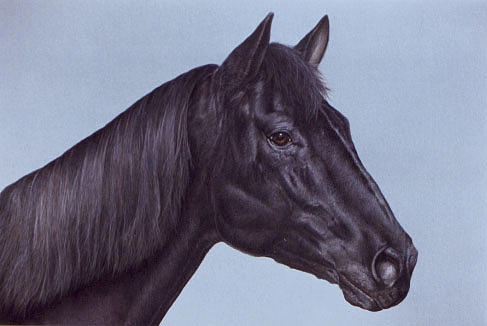Quarter Horse Painting - Satch by Andrea Ellwood