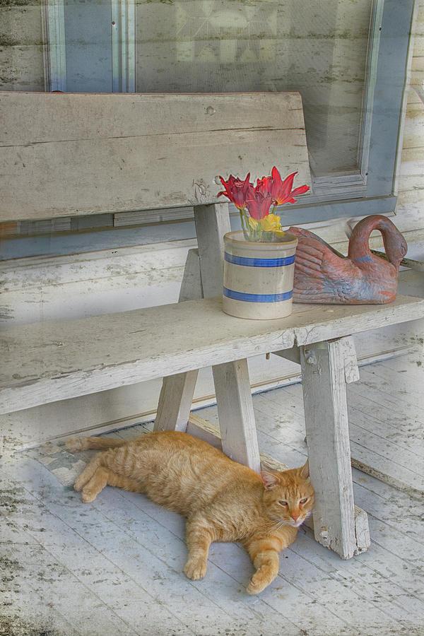 Cat Digital Art - Saturday on the Porch by Jolynn Reed
