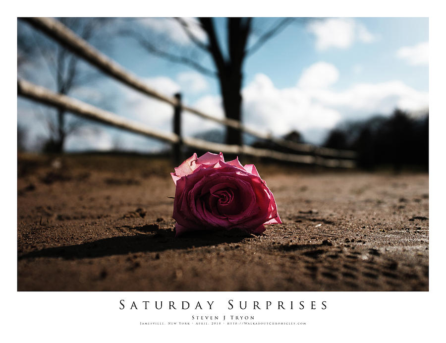 Beach Photograph - Saturday Surprises by Steven Tryon