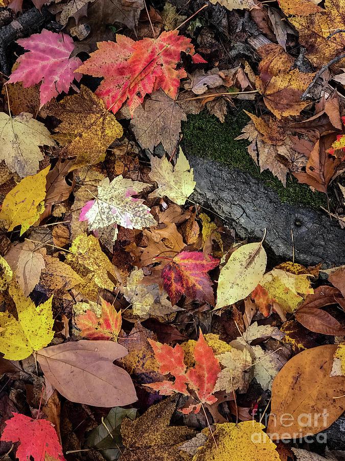 Leaves Photograph - Saturnine by Joseph Yarbrough