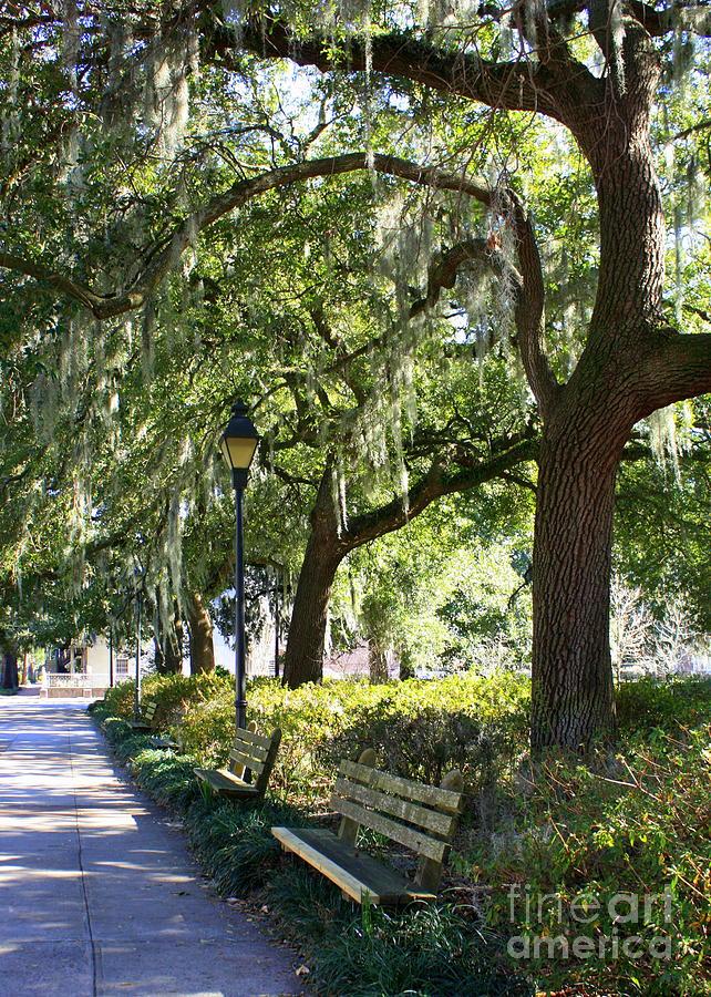 Parks Photograph - Savannah Benches by Carol Groenen