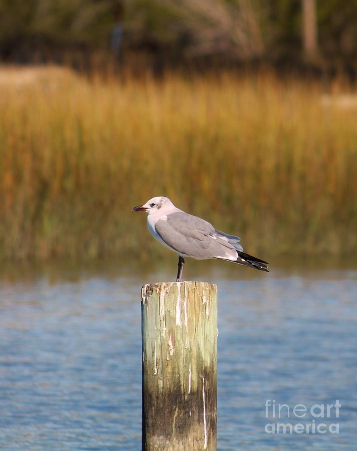 Shore Photograph - Savannah Shore Bird by Keri West