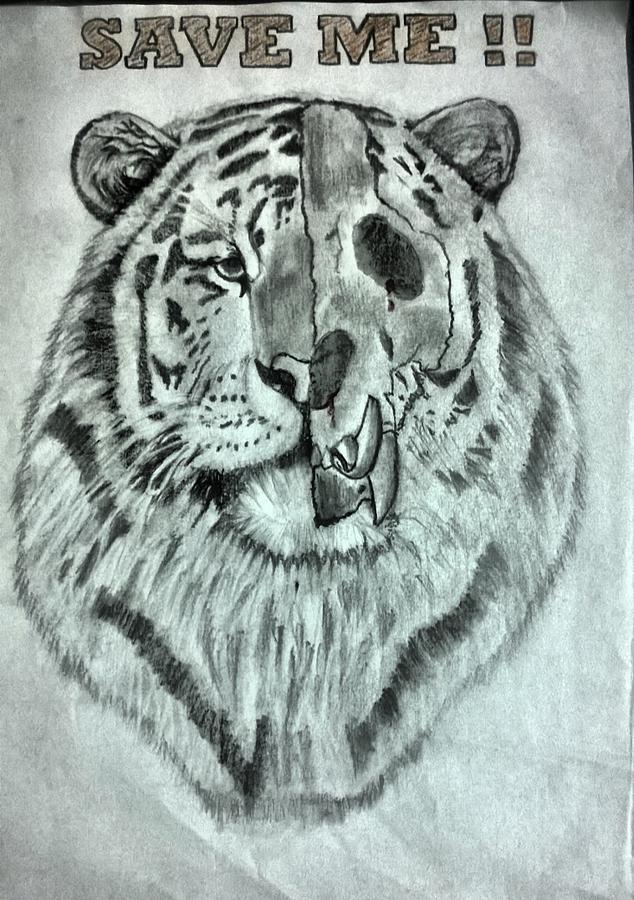 Save Tiger Drawing By Amitabh Ganguly