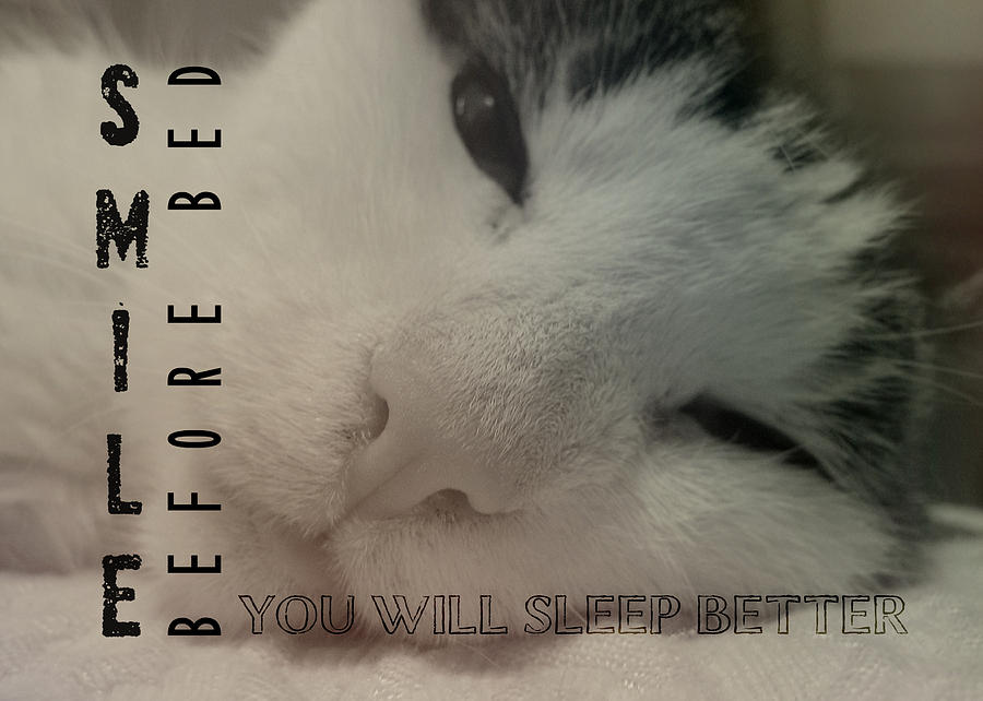 Cat Photograph - Saving Jane Quote by JAMART Photography
