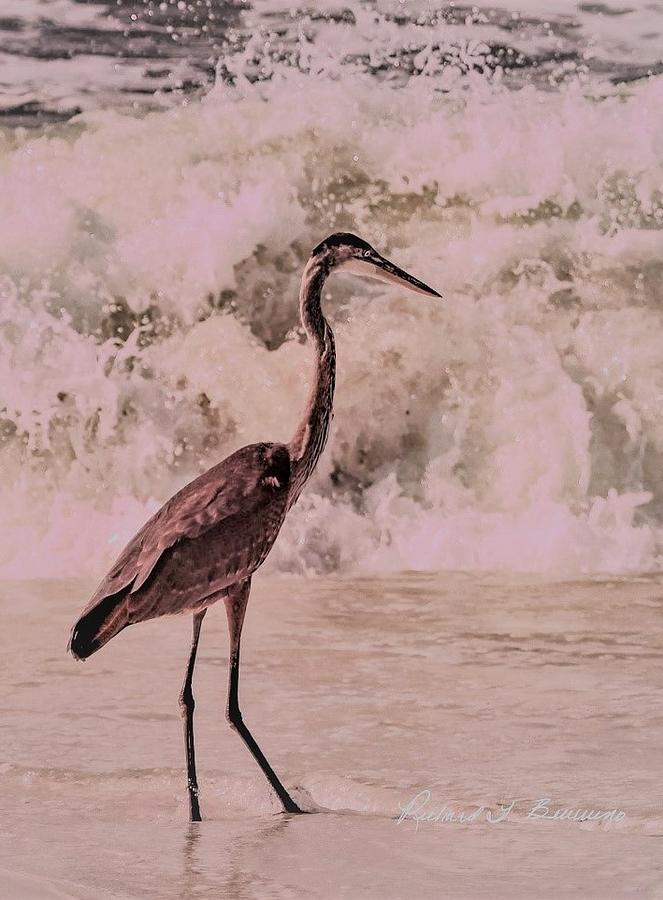 Nature Photograph - Scanning The Surf by Richard Bevevino