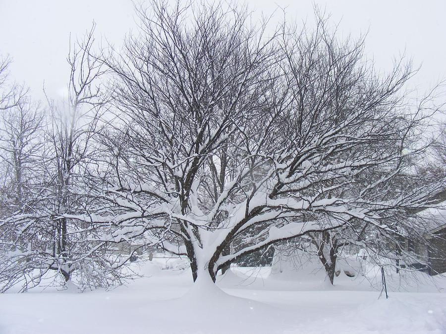 Snowstorm Photograph - Scared by James and Vickie Rankin