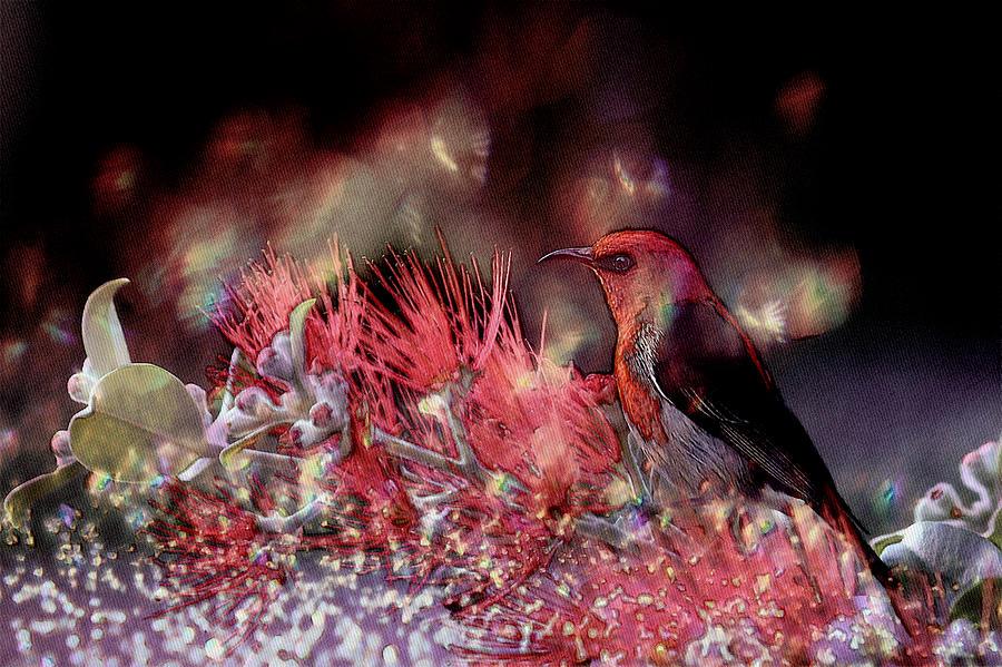 Bird Photograph - Scarlet Honeyeater by Ericamaxine Price