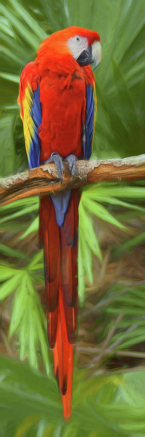Scarlet Macaw by Nikolyn McDonald