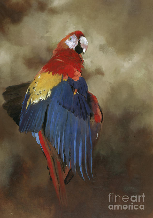 Macaw Painting - Scarlet Macaw One by Odile Kidd