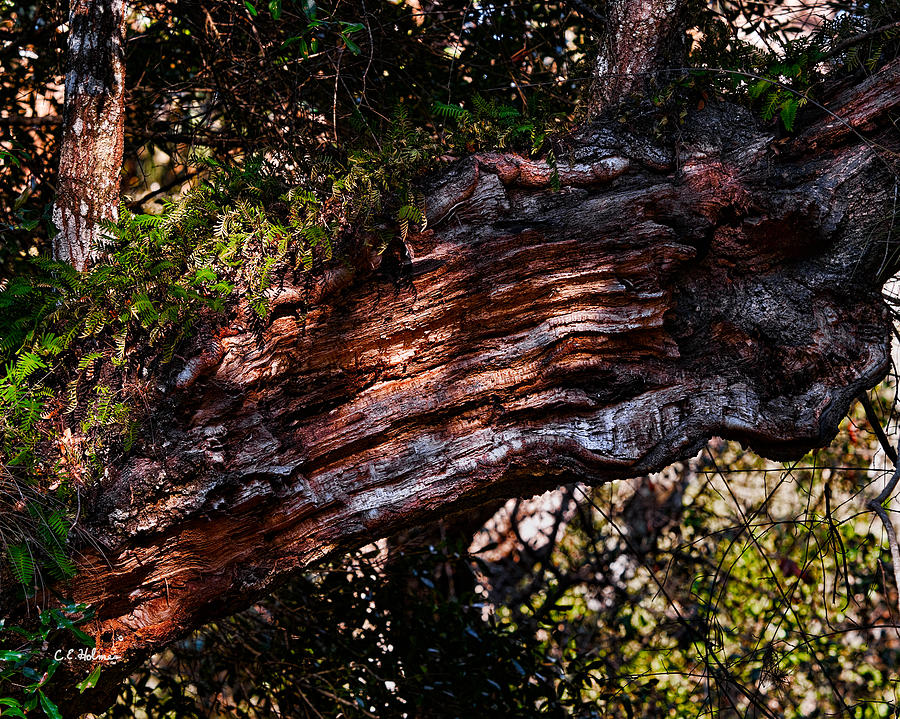 Nature Photograph - Scarred by Christopher Holmes